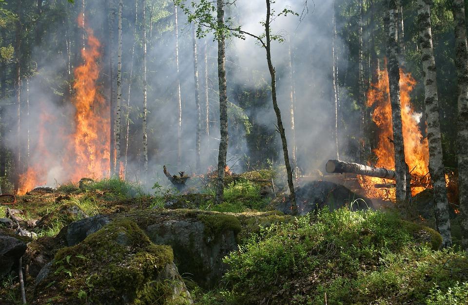 この画像には alt 属性が指定されておらず、ファイル名は forest-fire-432870_960_720.jpg です